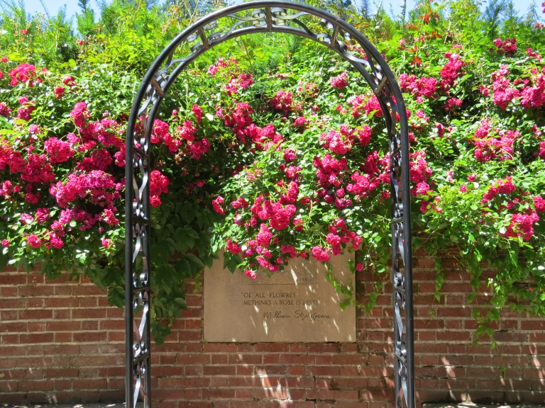 International Rose Test Garden Shakespeare Garden Portland Oregon