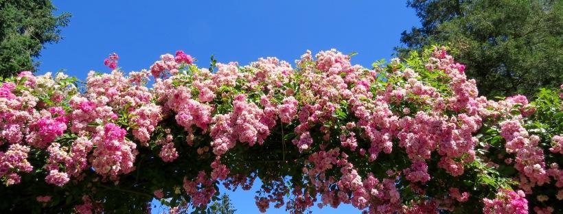 International Rose Test Garden Portland Oregon overhead
