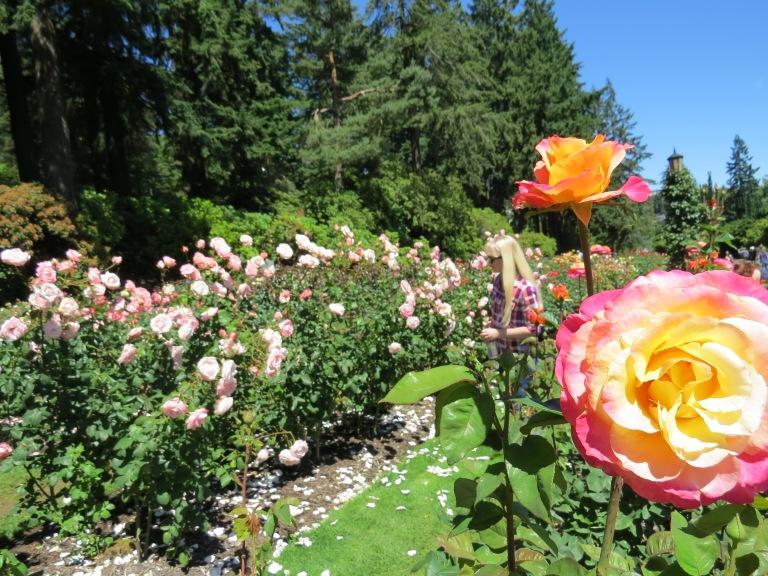International Rose Test Garden Portland Oregon roses