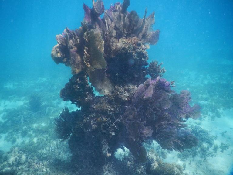Isla Caja de Muertos snorkeling Puerto Rico
