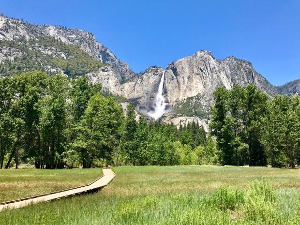 Sentinel Meadow view of Yosemite Falls