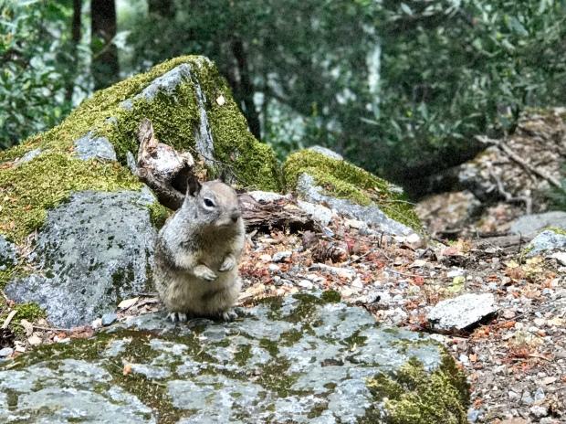 Squirrel on the Mist Trail Yosemite